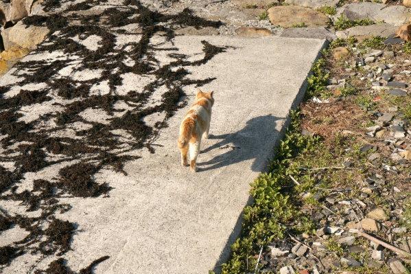 わかめと猫