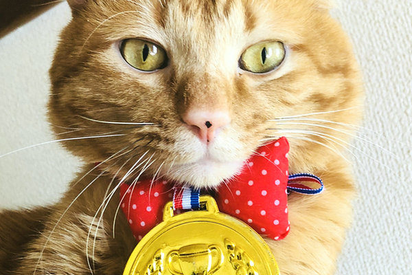 金メダルのネコちゃん